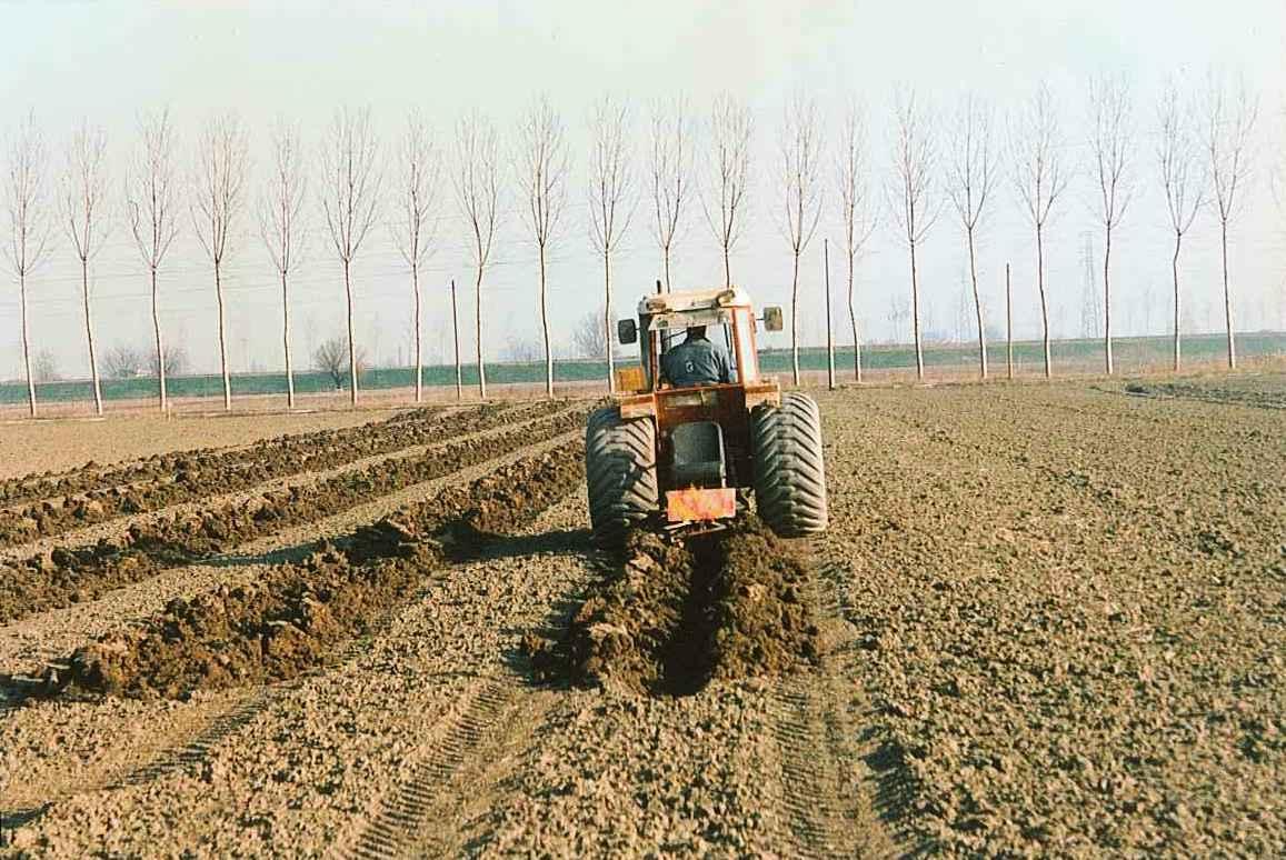 03-feb 1998 fasi piantagione- solchetti 1